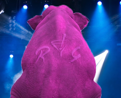 raise-your-glass-pink-tribute-band-pink-elephant